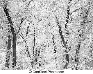 Stand of trees covered in snow in the winter