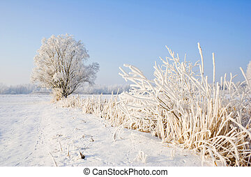 Winter frost in the wild forest. Deep wilderness nature