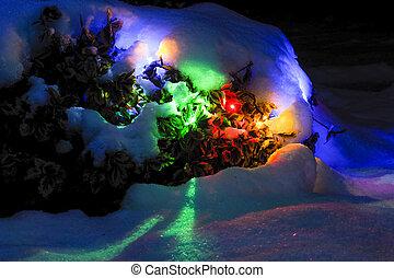winter garden at night