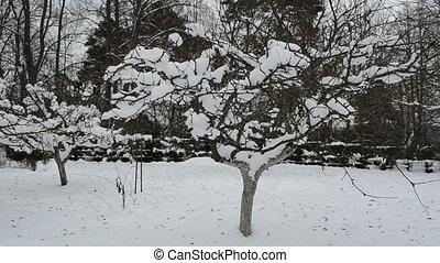 winter garden tree woman