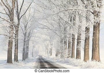 winter, gasse, auf, a, neblig, morgen