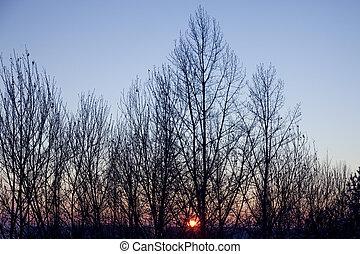 winter, gegen, holz, sonnenuntergang, bloß, rotes