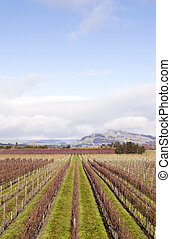 Winter grapevines NZ 02