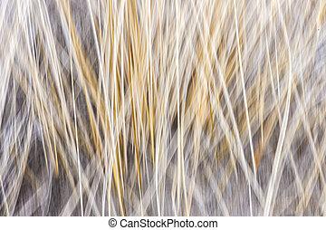Winter grass abstract
