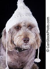 winter hat on dog