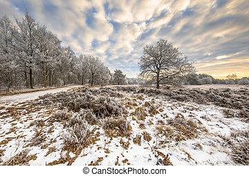 Winter heathland landscape Assen Drenthe