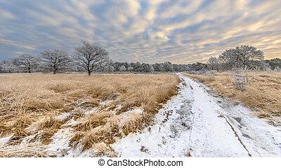 Winter heathland landscape panorama Assen Drenthe