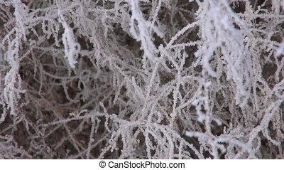 winter hoarfrost rime on plants
