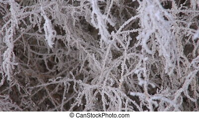 winter hoarfrost rime on plants