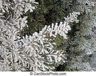 Winter hoarfrost weather art and nature.