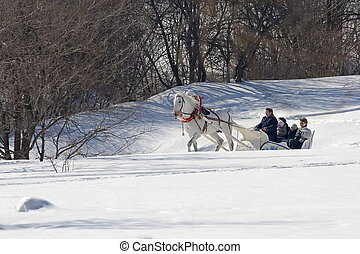 Winter holiday-walk in carriage with white horse in a winter sunny day