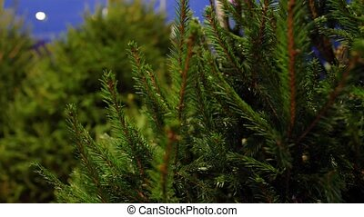 christmas tree sale at market in evening - winter holidays ...