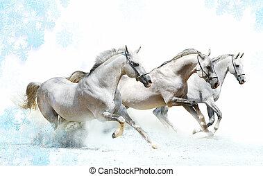 winter horses - trio of horses in snow