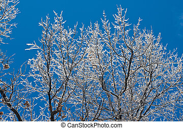 Winter Ice Storm - Ice covered tree branches with a blue sky...