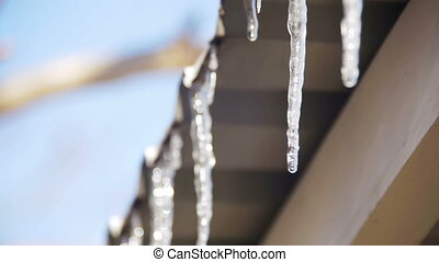 Winter Icicles Melting on the Roof Under the Spring Sun and Dripping from their Tips. Slow Motion