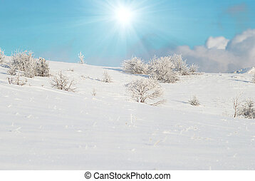 Winter icy forest - Winter icy landscape with bright shining...