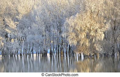 winter, ijzig, bomen