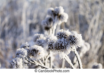 Winter in Belarus