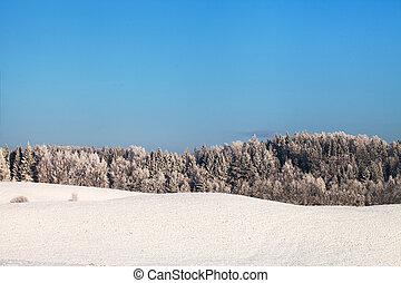 Winter in field.