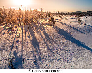 Winter in Jizera Mountains at sunset time with long shadows of trees, Czech Republic