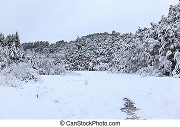 Winter in Norway - A gray winter day in Norway with snow in...