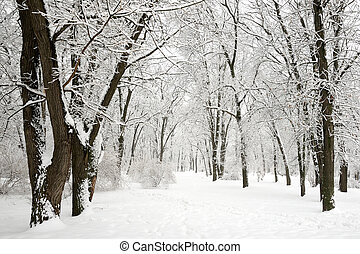 Winter in park - trees covered with snow
