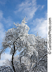 winter in sweden with snow on the top of the tree