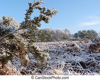 Winter in The Ashdown Forest
