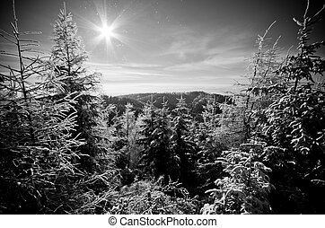 Winter in the forest