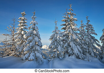 Winter in the mountain forest - Snow covered trees. Winter...
