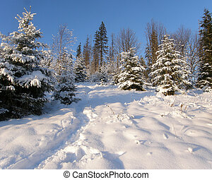 Winter in the mountains of Carpathians