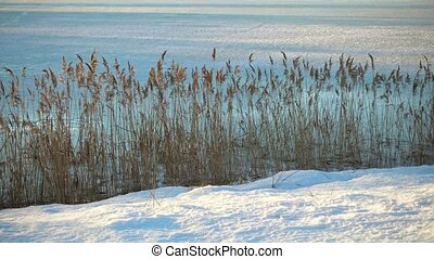 Winter in the nature, grass on a coast of lake.
