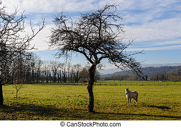 Winter in the Savoy Area in Southern France