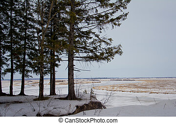 Winter in the Siberian expanses - Frozen nature, cedars on ...