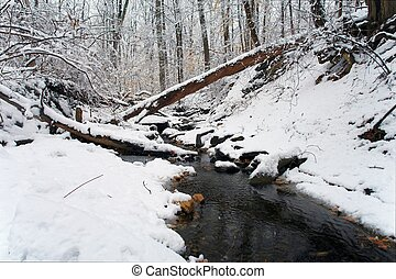 Winter in Washington DC