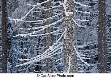 Winter in woods