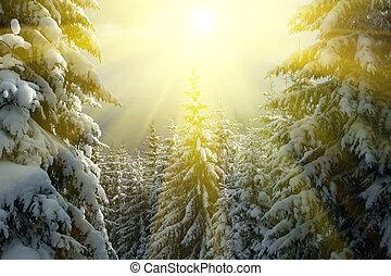 winter, jahreszeit