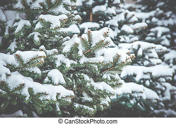 winter., jehličnatý, větvit, zamrzlý, snowstorm., neposkvrněný