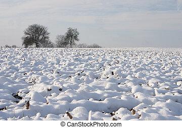 Winter Landscape - 01