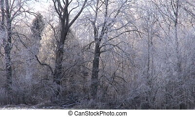 winter landscape and hoarfrost rime
