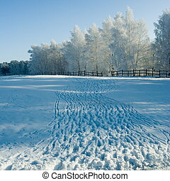 Winter landscape and trees - Cold winter day, beautiful...
