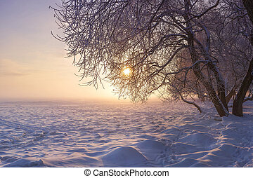 Winter landscape at sunset. Christmas nature background. Colorful winter with sun. Frosty trees. Beautiful Xmas scene. Natural view on snowy trees.