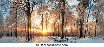 Winter landscape at sunset in a forest