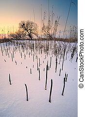 Trees and charred reeds at sunset in winter.