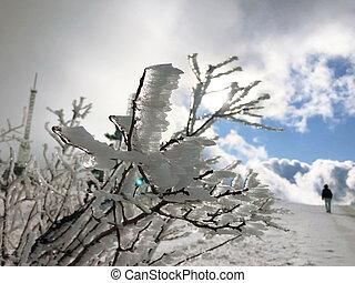 Winter landscape background, trees in hoarfrost, snow.