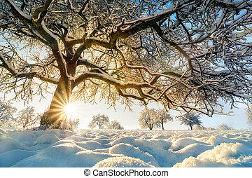 Winter landscape: backlit tree on a field