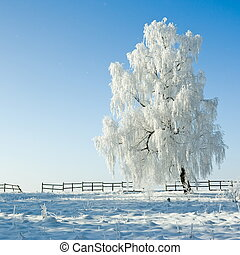 Winter landscape - Cold winter day, beautiful hoarfrost and ...
