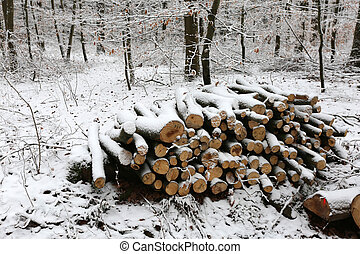 Firewood in the winter forest