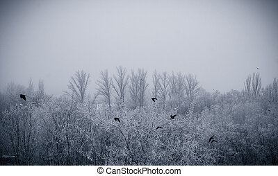 winter landscape - flying birds above the trees in frost