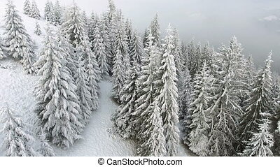 Winter landscape. Flying over trees covered with snow in the...
